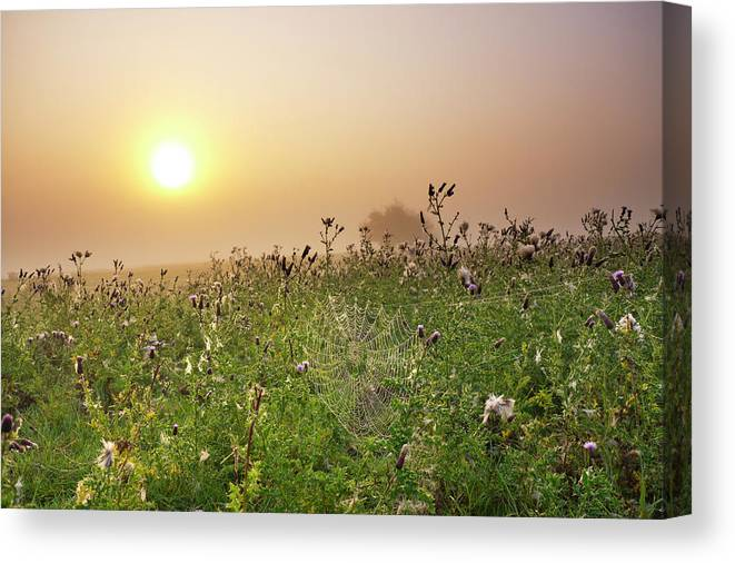 Grass Canvas Print featuring the photograph Morning Dew On Spiders Cobweb by Travelpix Ltd