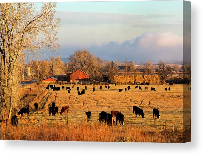 Scenics Canvas Print featuring the photograph Morning Farm Scene by Beklaus