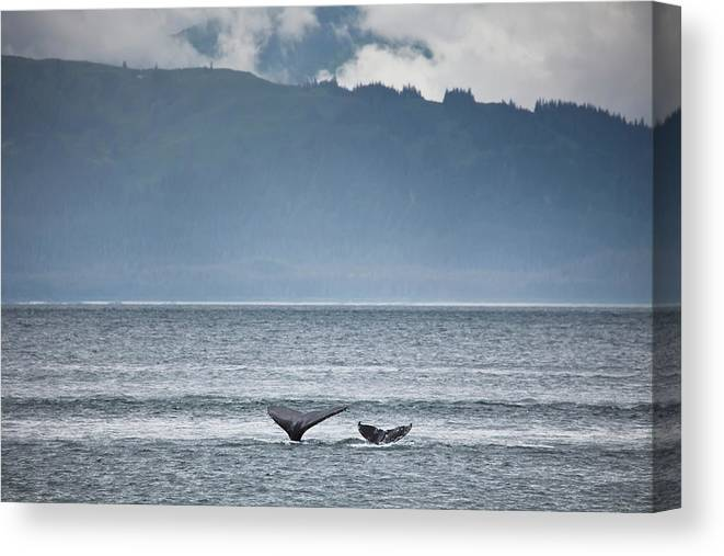 Water's Edge Canvas Print featuring the photograph Mother And Calf Whale Tails Megaptera by Blake Kent / Design Pics