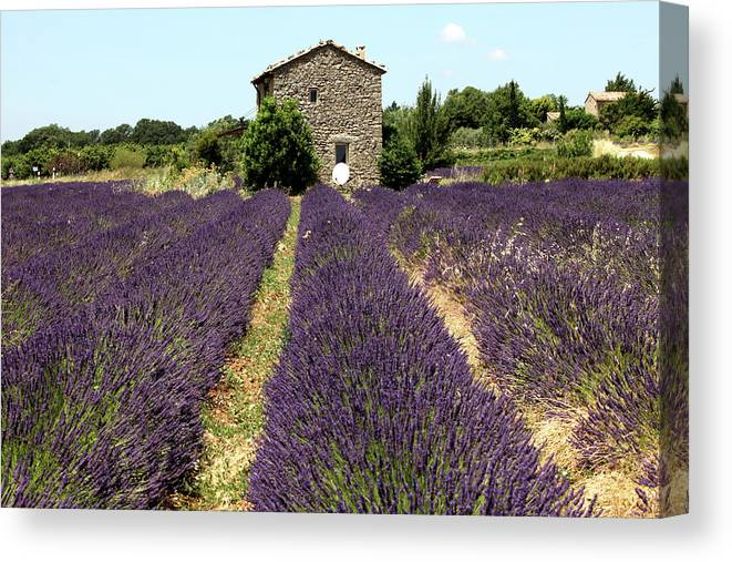 Old Farmhouse In Provence With Lavender Canvas Print Canvas Art By Choja