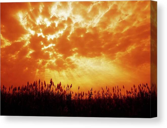 Orange Color Canvas Print featuring the photograph Orange Tinted Sky Illustrating by Tommyix