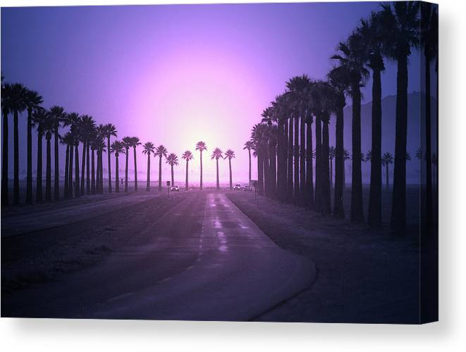 Colorized Canvas Print featuring the photograph Palm Road by Jim Painter