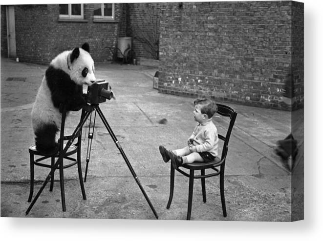 Child Canvas Print featuring the photograph Panda Photo by Bert Hardy