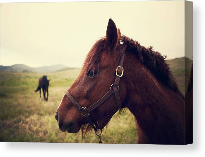 Horse Canvas Print featuring the photograph Profile Of Brown Horse In Meadow by Shari Weaver Photography