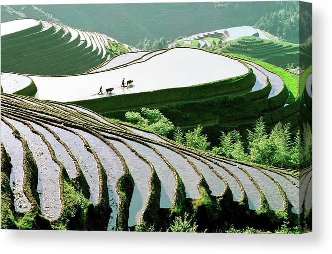 Chinese Culture Canvas Print featuring the photograph Rice Terraces by Kingwu