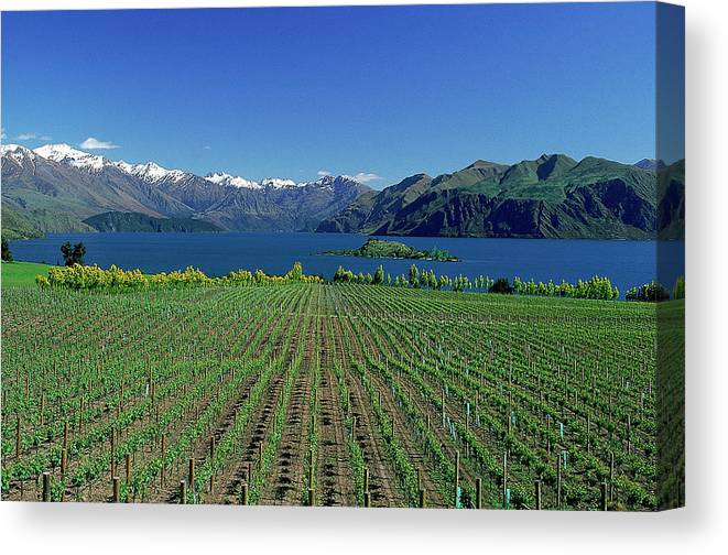 Snow Canvas Print featuring the photograph Rippon Vineyard & Lake Wanaka, South by Robin Smith