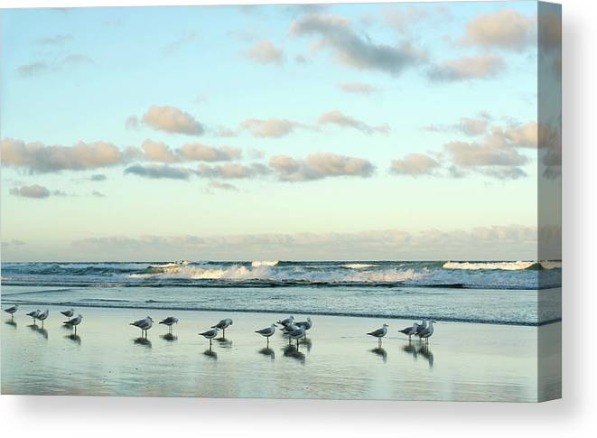 Working Canvas Print featuring the photograph Seagulls In Heaven V2 by Breecedownunder