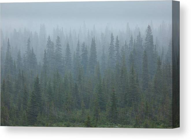 Unesco Canvas Print featuring the photograph Snow Storm In The Forests Of Jasper by Mint Images/ Art Wolfe
