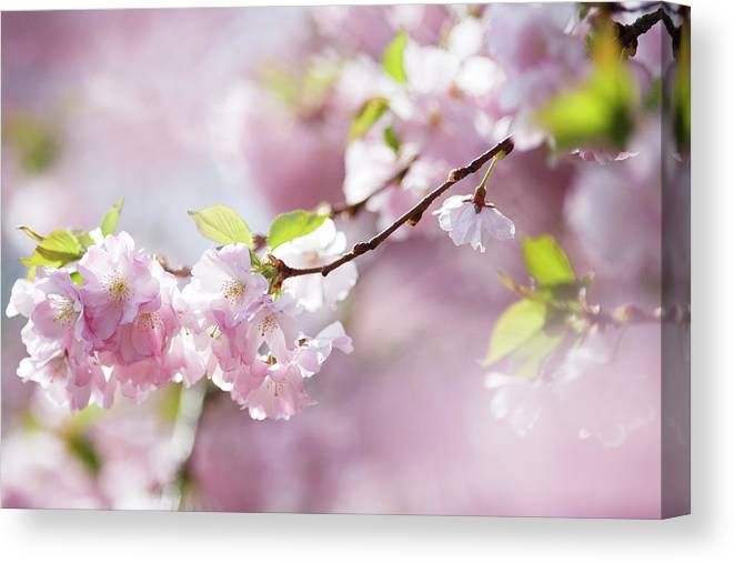 People Canvas Print featuring the photograph Spring by Goldhafen