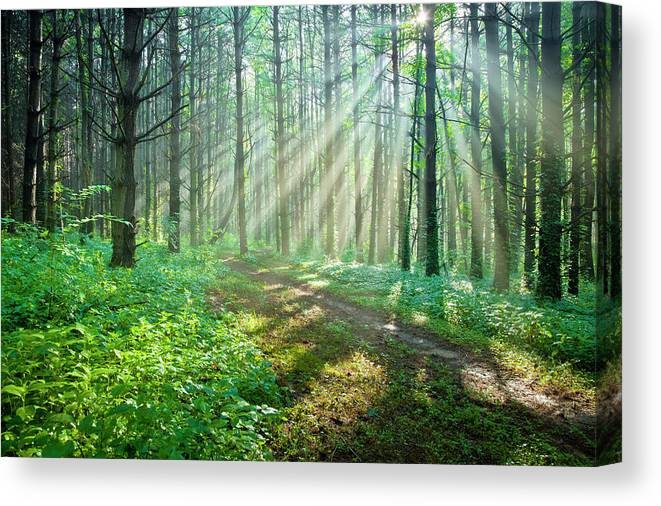 Outdoors Canvas Print featuring the photograph Sunbeams Filtering Through Trees On A by Drnadig