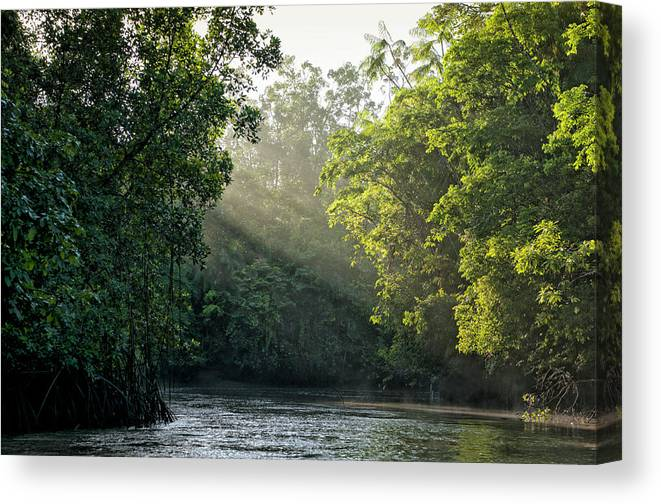 Tropical Rainforest Canvas Print featuring the photograph Sunlight Shining Through Trees On River by Brasil2