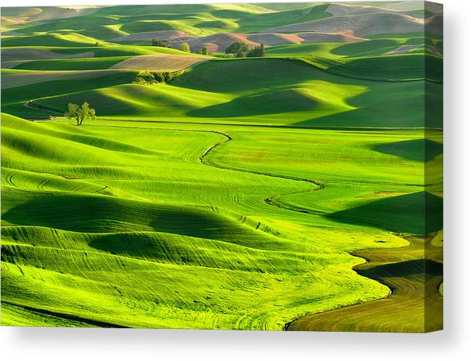 Scenics Canvas Print featuring the photograph The Palouse Rolling Hills by Justinreznick