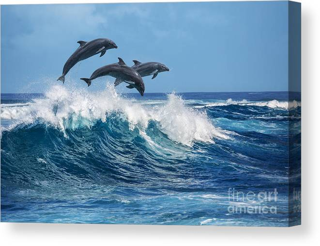 Beauty Canvas Print featuring the photograph Three Beautiful Dolphins Jumping by Willyam Bradberry