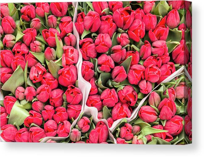 North Holland Canvas Print featuring the photograph Tulips For Sale At A Flower Market by P A Thompson