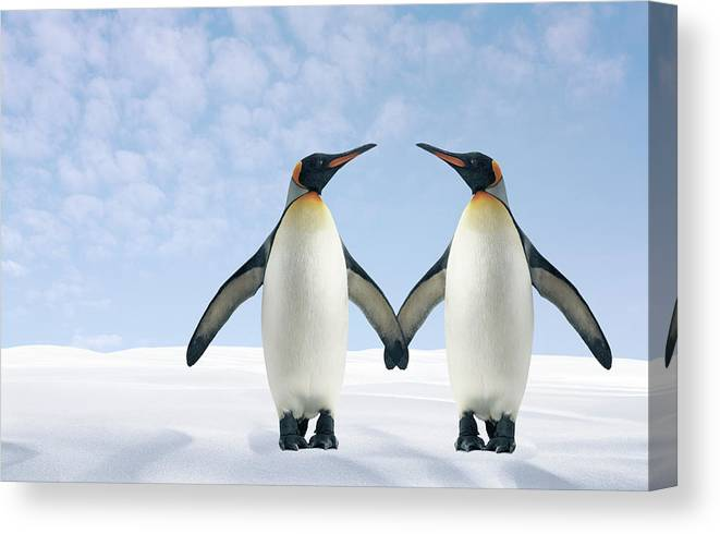Animal Themes Canvas Print featuring the photograph Two Penguins Holding Hands by Fuse