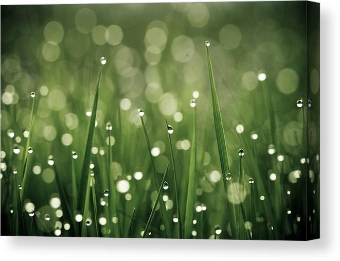 Grass Canvas Print featuring the photograph Water Drops On Grass by Florence Barreau