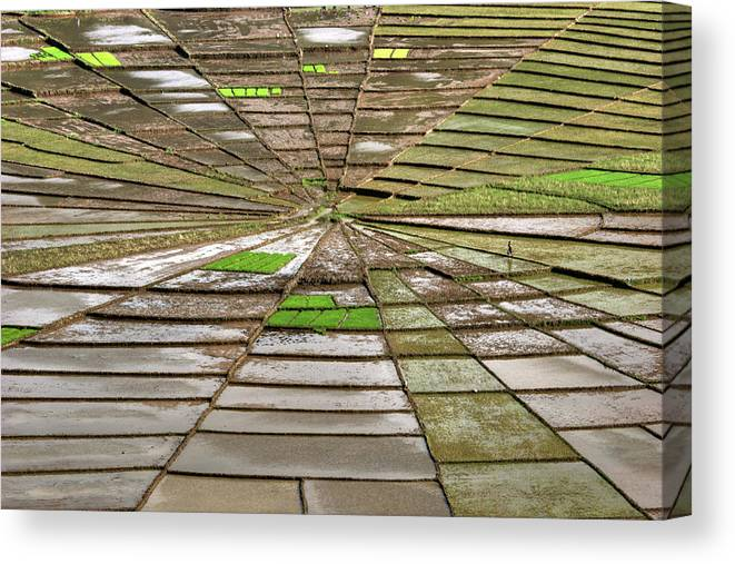 Working Canvas Print featuring the photograph Working The Spiderwebs by Photo ©tan Yilmaz