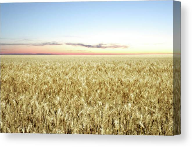 Scenics Canvas Print featuring the photograph Xxl Wheat Field Twilight by Sharply done