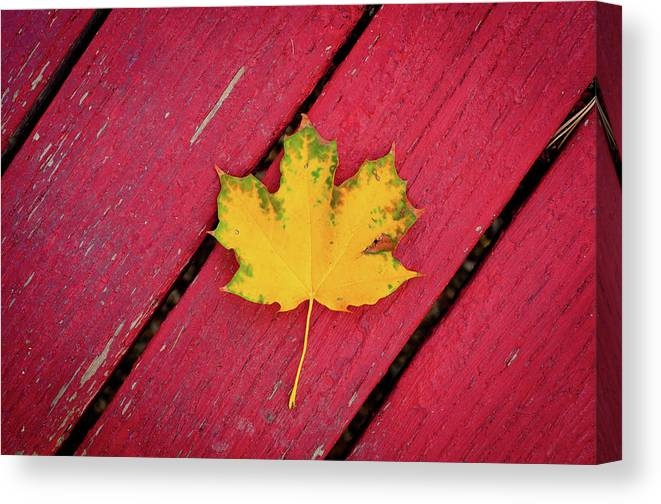 Outdoors Canvas Print featuring the photograph Yellow Maple Leaf Against A Red Deck by Photo By Sam Scholes