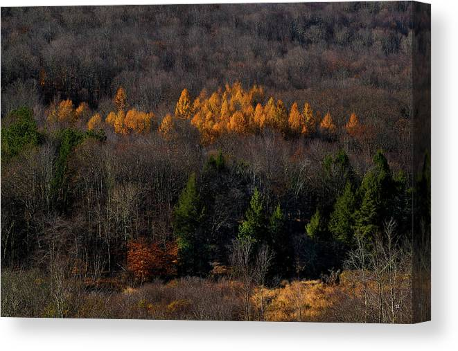 Nature Canvas Print featuring the photograph Yellow Pine by Tom Romeo