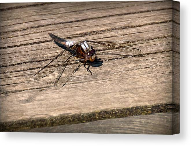 Insects Canvas Print featuring the photograph 20-0609-0227 by Anthony Roma