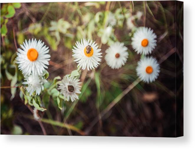 Insect Canvas Print featuring the photograph Beatle Flower by Lianne B Loach