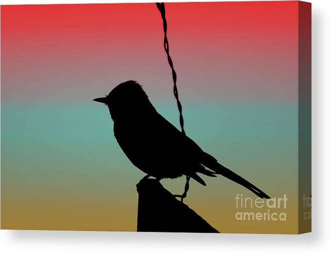 Tuscan Canvas Print featuring the photograph Black Phoebe on Sign Silhouette on Tuscan Sunset by Colleen Cornelius