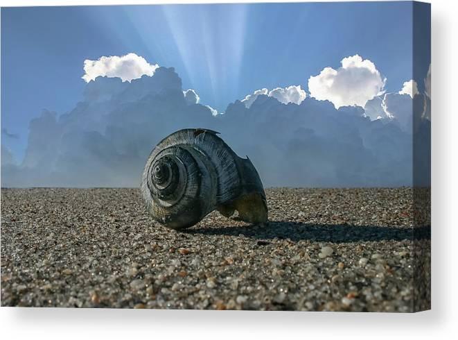 Beach Canvas Print featuring the photograph Broken Shell by Jim Painter