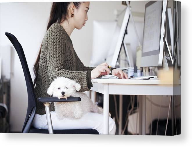 Pets Canvas Print featuring the photograph Business Woman Working At Office With Dog by Kohei Hara