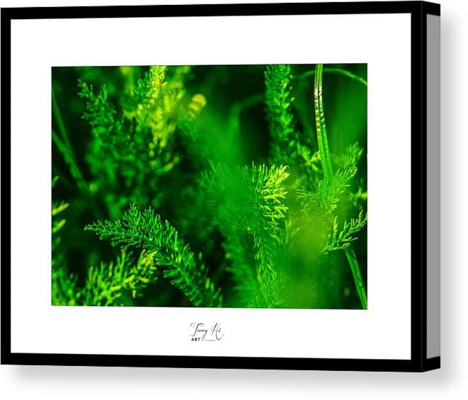 Green Leaves by Terry Hi