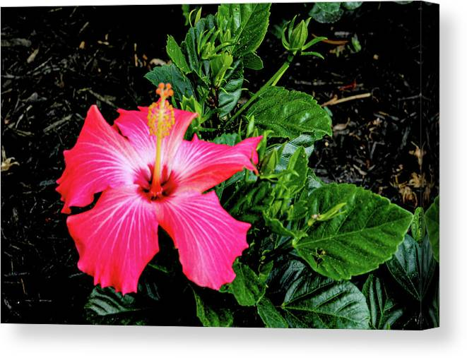 Flower Canvas Print featuring the digital art La cayena by Daniel Cornell