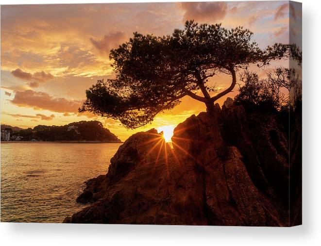 Lloret Canvas Print featuring the photograph Lonely Tree At Sunrise On The Beach Of Fenals, Lloret De Mar by Vicen Photography