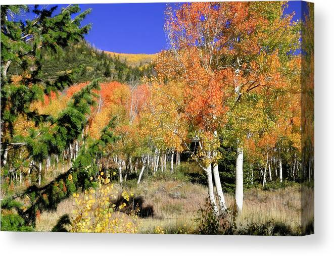 Fishlake National Forest Canvas Print featuring the photograph Mountain Top Aspens by Donna Kennedy