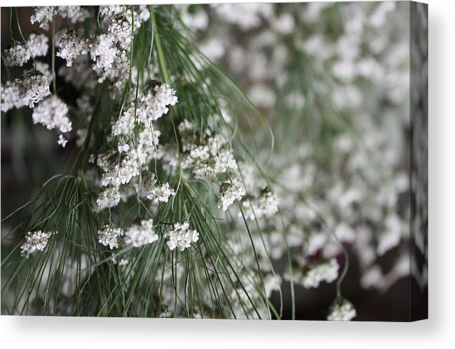 Queen Anne's Lace Canvas Print featuring the photograph Queen Anne's Lace by Vicki Cridland