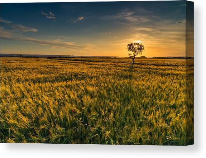 Tranquility Canvas Print featuring the photograph Scenic View Of Farm Against Sky During Sunset by Ralf Schastok / EyeEm