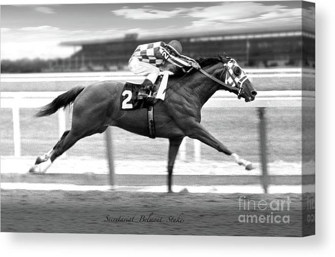 Secretariat Canvas Print featuring the painting Secretariat, Belmont Stakes, back stretch by Thomas Pollart