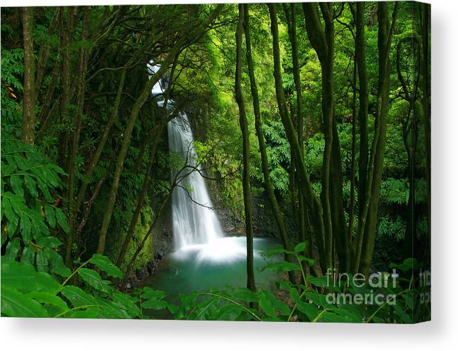 Waterfall Canvas Print featuring the photograph Waterfall in the Azores by Gaspar Avila