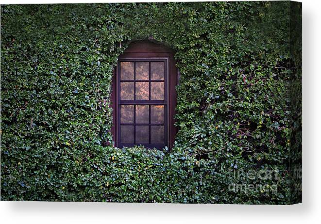 Window Canvas Print featuring the photograph Magic Window by Dan Holm