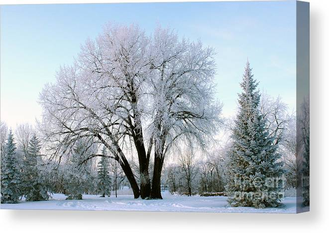 Trees Canvas Print featuring the photograph Sunset Frost by Steve Augustin