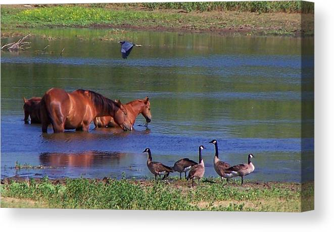 Horses Canvas Print featuring the photograph We are all friends here. by Lilly King