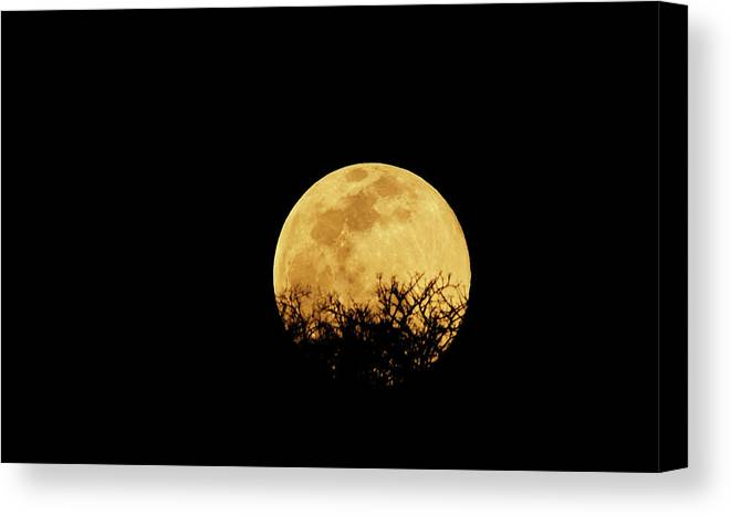 Horror Canvas Print featuring the photograph Moon Rise by Rollingearth