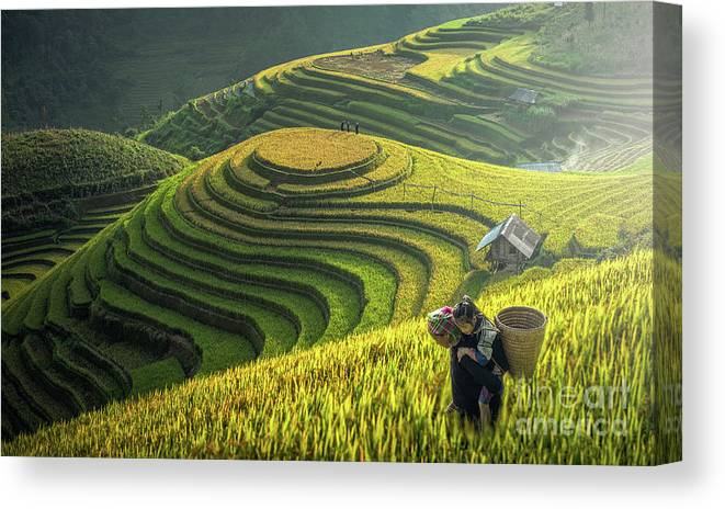Toughness Canvas Print featuring the photograph Mother And Dauther Hmong, Working by Std