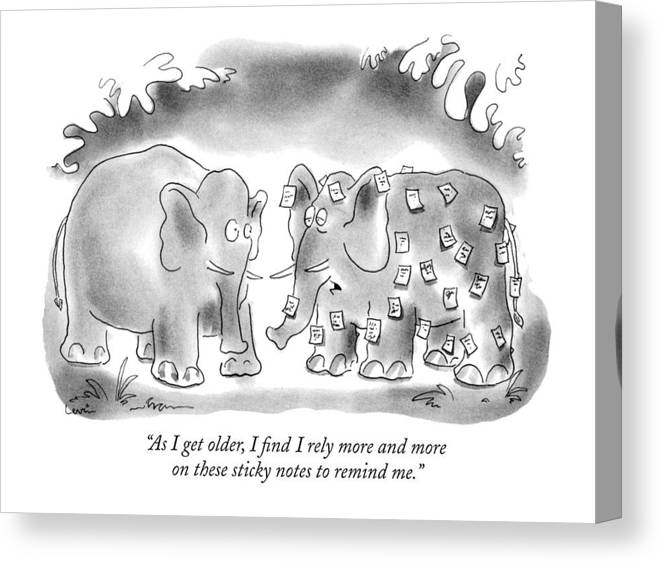 Animals Canvas Print featuring the drawing As I Get Older by Arnie Levin