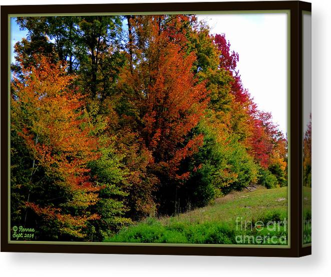 Fall Colors Canvas Print featuring the photograph Autumn by Rennae Christman