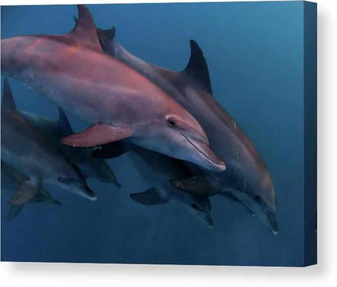 Underwater Canvas Print featuring the photograph Dolphins by Imagen Rafael Cosme Daza  Www.rafaelcosme.com
