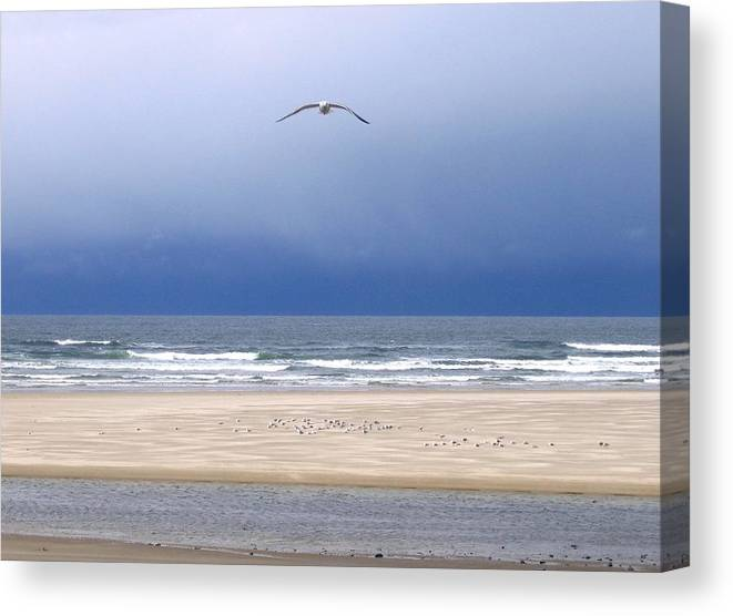 Incoming Seagull Canvas Print featuring the photograph Incoming Seagull by Will Borden