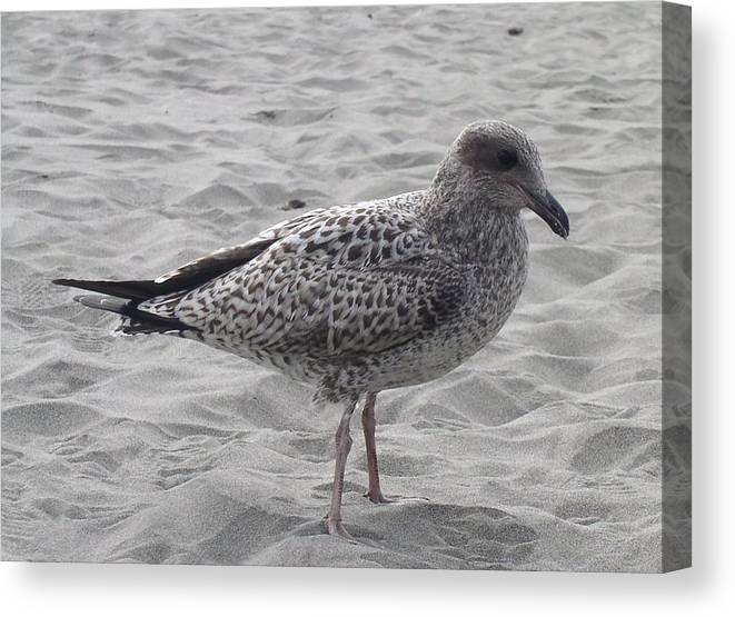Seagulls Canvas Print featuring the photograph Lonely by Valerie Josi