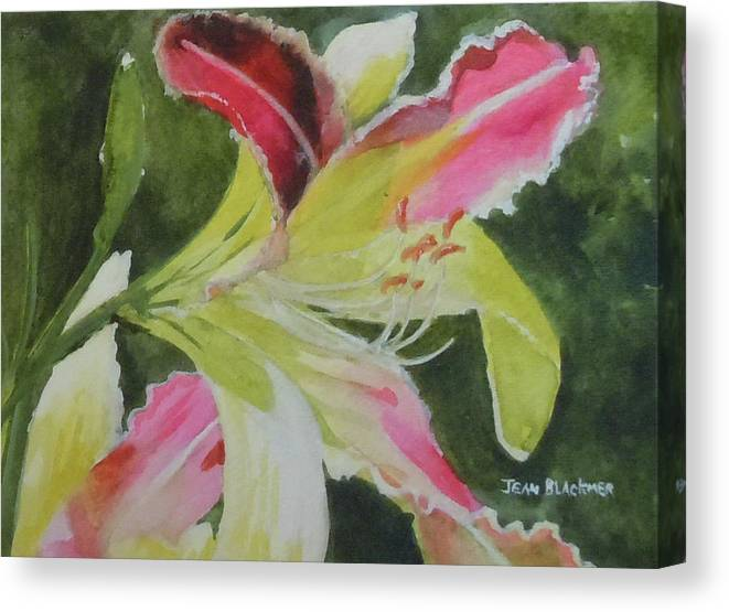 Daylily Canvas Print featuring the painting Daylily Study 1 by Jean Blackmer