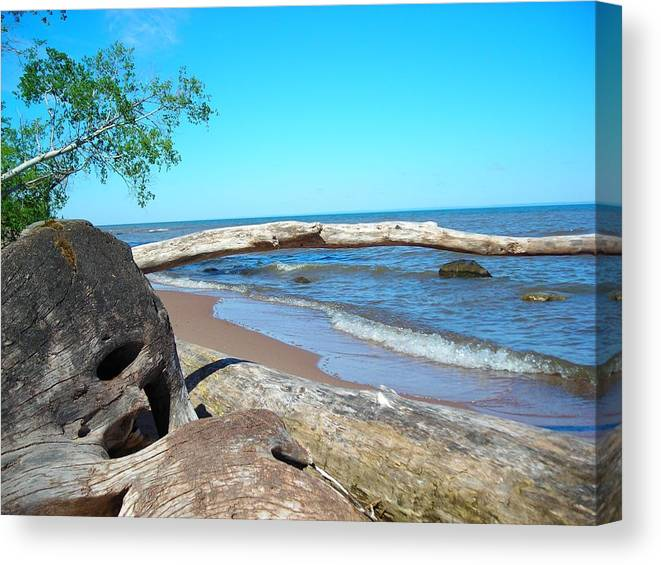 Ocean Canvas Print featuring the photograph Driftwood by Peter Mowry