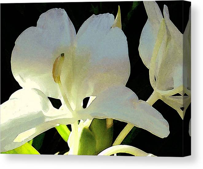 Ginger Canvas Print featuring the photograph Fragrant White Ginger by James Temple